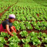 แนวทางการปรับตัวของ อาชีพเกษตรกร ในภาวะวิกฤติโควิด-19