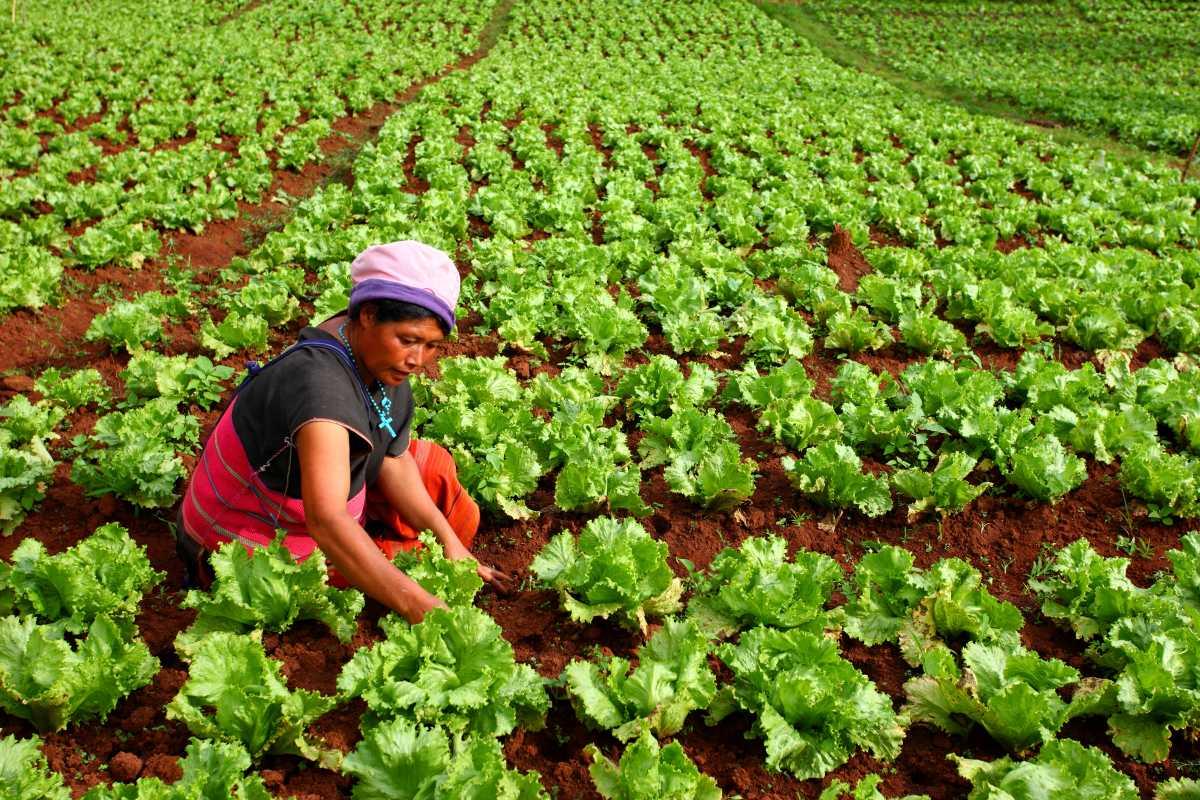 อาชีพเกษตรกร